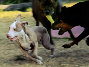 Aggressive Dog Behavior