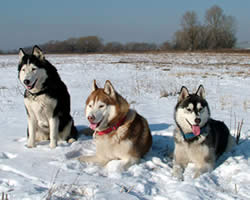 Sled Dog Names