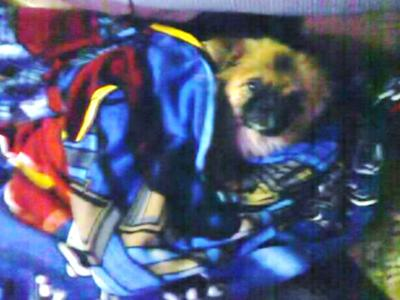 Chester in a superman blankie - First trip to Philly!